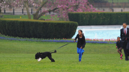 US President Barack Obama and daughters Malia and Sasha walk with the new family dog Bo, a Portuguese water dog, on April 14, 2009 at the White House in Washington